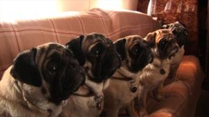 Valentino's Dogs